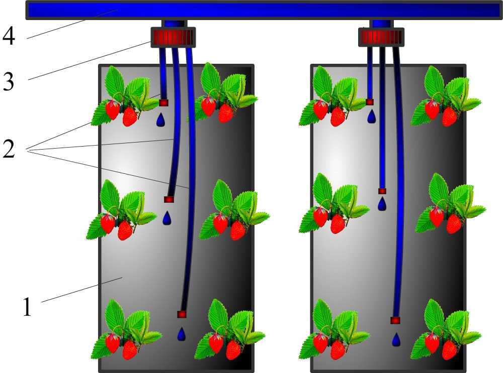 схема выращивание клубники